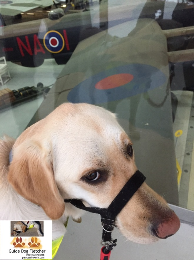 Me guide dog Fletcher in front of a plane at Duxford
