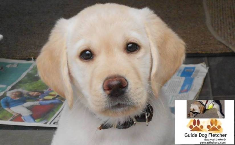 Me guide dog Fletcher when I was a little puppy
