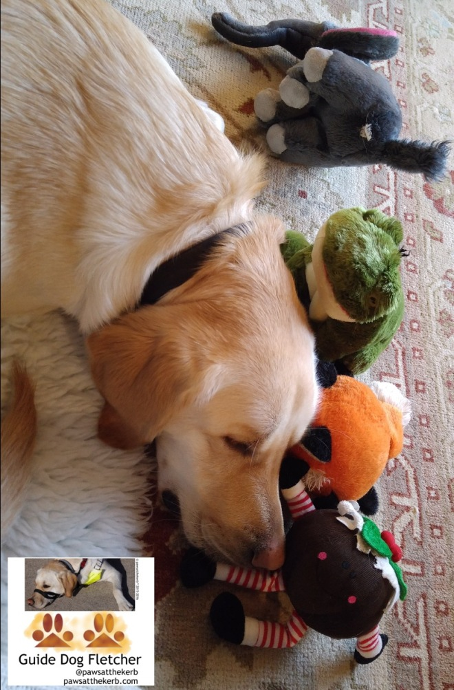 Me guide dog Fletcher snuggled up against my cuddly toys