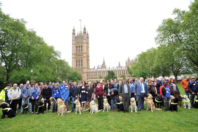 Many guide dogs and their humans in several rows in front of Big Ben and Houses of Parliament