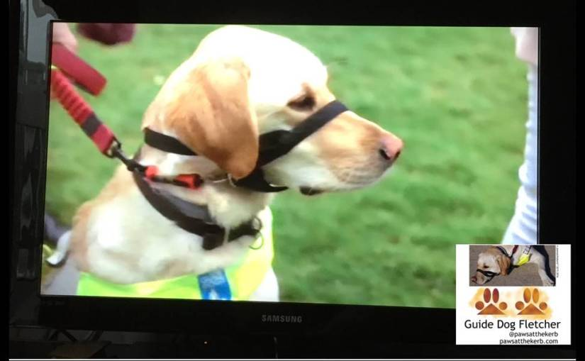 Getting MPs support for #AccessAllAreas for guidedogs