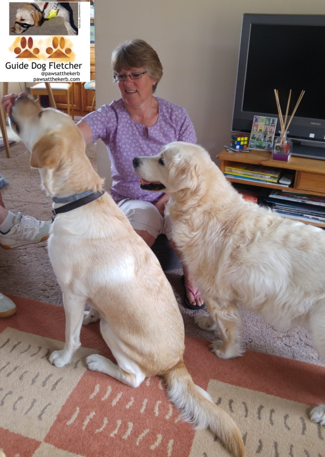 Me guide dog Fletcher sitting down getting a treat from my puppy walker Di and with my doggy auntie Kerry to the side of me