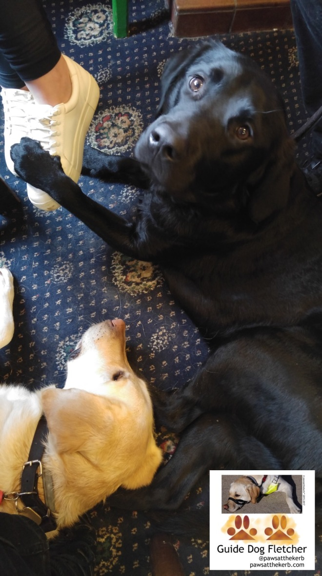 Me guide dog Fletcher lying down on the blue and cream pub carpet. My golden head just in view at the bottom of the photo. My friend Isaac is lying down turned to you. His black fur paws are wrapped around our boarders feer. (c) pawsatthekerb
