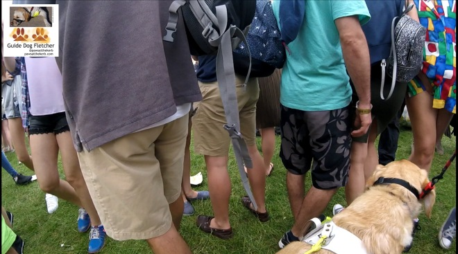 Me guide dog Fletcher once again guiding through the crowds. You can see the back of my head and shoulders in the far right corner of the photo. The rest of the photo shows men and women from the shoulders down. Most of them are wearing shorts which are different shades of brown. Many of the t-shirts are shades of blue. @pawsatthekerb