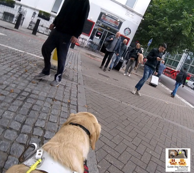 Me guide dog Fletcher crossing a side road. I'm about a third of the way across and in front of me are a few humans. One with a wheelie suitcase. Another with a mobile phone. @pawsatthekerb