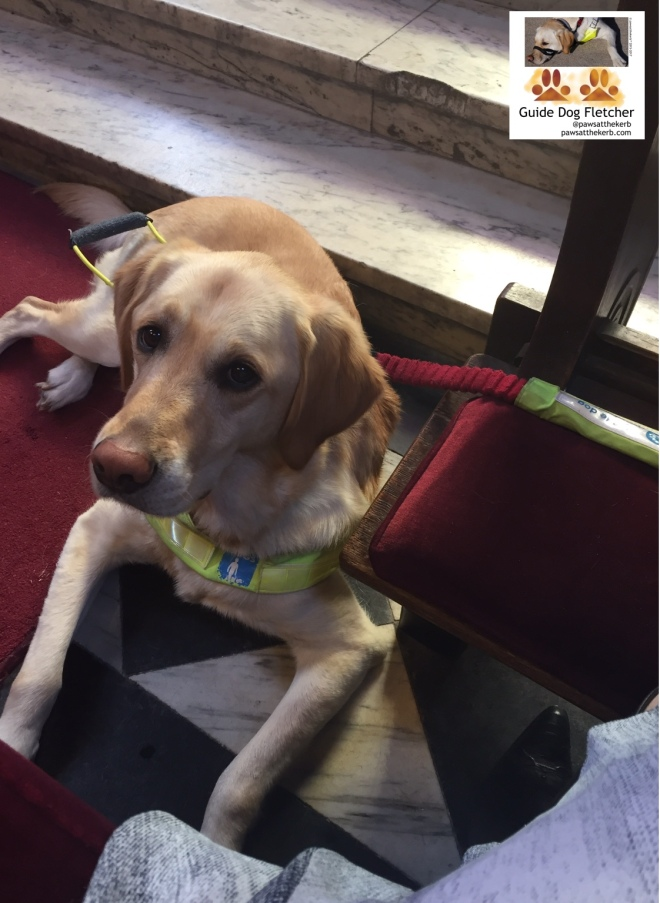 Me guide dog Fletcher lying down looking up at you. I'm in my guide dog harness and have a red lead. I'm a golden fur Labrador Golden Retriever cross. I'm lying down on marble floor with marble steps behind me. You can just see the corner of my human's dress as she sits on the pew. @pawsatthekerb