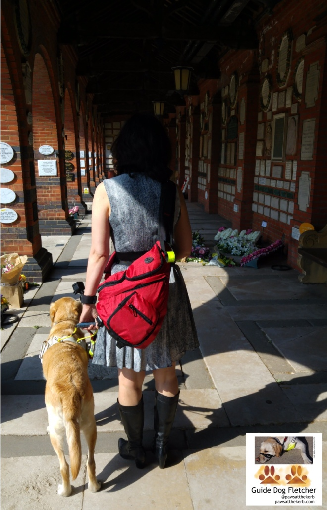 Me guide dog Fletcher and my human from the back. I'm guiding her in harness. And what you can't tell from the photo is that I'm providing her with emotional support too. We're walking down a brick corridor which has arches to the left. The sun is shining on the memorial stones of the dearly departed. @pawsatthekerb