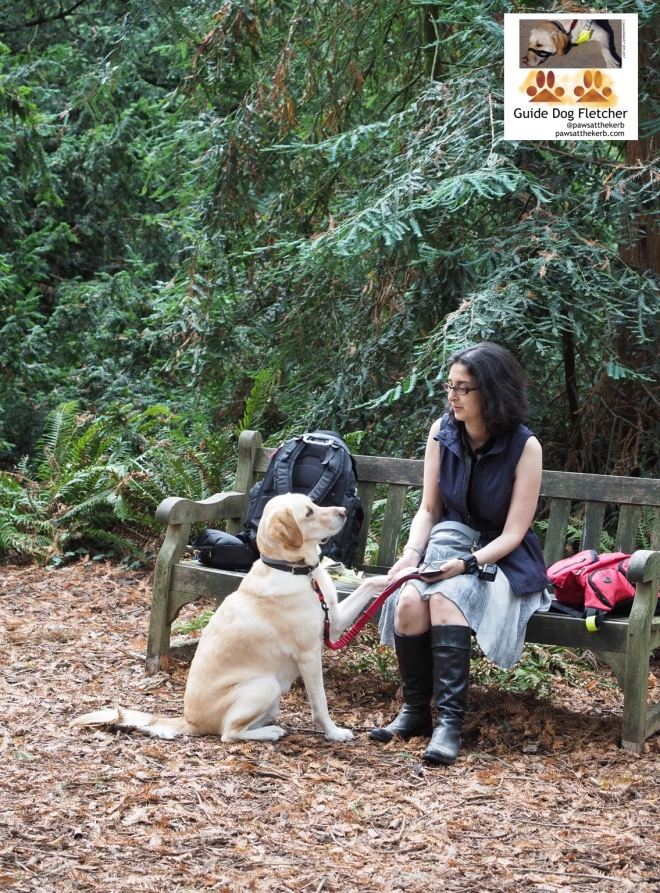 Me guide dog Fletcher and my human. I'm out of harness and still know how to provide comfort. I'm sitting down. You get my side profile. I've raised one paw to my human you has it in her hand. We're looking at each other. She's on a wooden bench outside with trees in the background. The bench has bags on it. One's blue the other is red. @pawsatthekerb