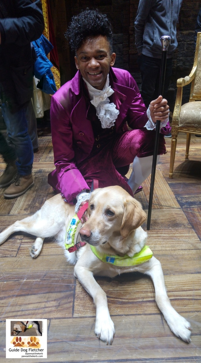Me guide dog Fletcher in my white guide dog harness with its blue and yellow flash with Hamilton The Musical star Jason Pennycooke in his President Thomas Jefferson outfit. All purple and shiny with a lacy white bow tie and neckchief. I'm in front lying down with Jason behind me. We're on the wood block stage floor. There's a posh chair just out of picture with gold legs. @pawsatthekerb