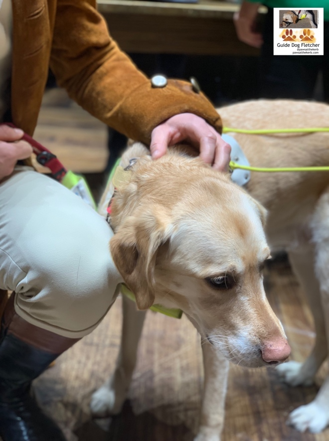 Me guide dog Fletcher getting a neck scratch during our touch tour. You've got an arm and leg of Hamilton. He's got black tall boots with brown trim. Cream breeches and light tan suede coat. @pawsatthekerb