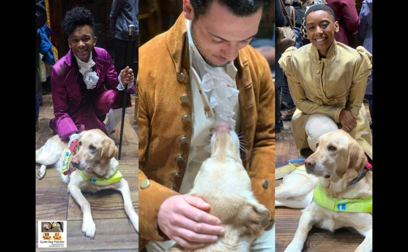 Me guide dog Fletcher in a collage of 3 photos of cast from Hamilton The Musical London. We've Jefferson, Hamilton, an Ensemble crew member.@pawsatthekerb.